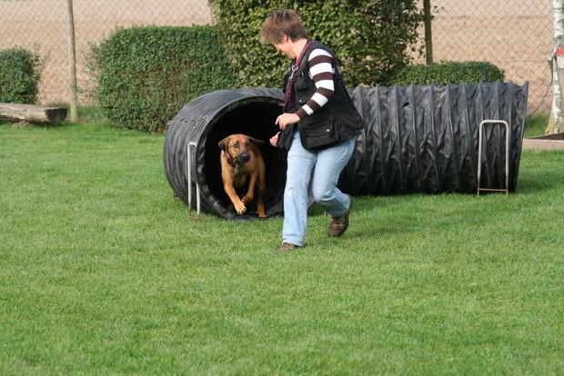 Hundesport1ds
