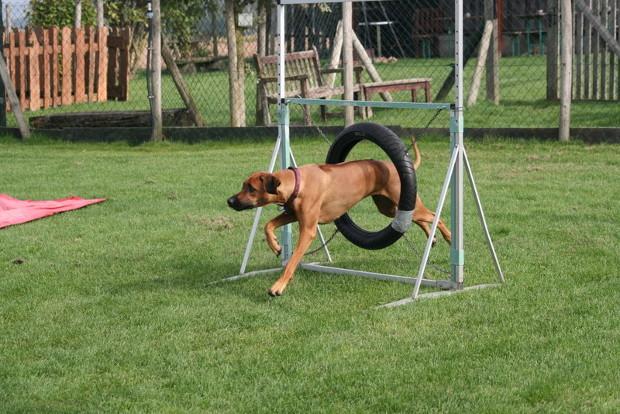 Hundesport2DS