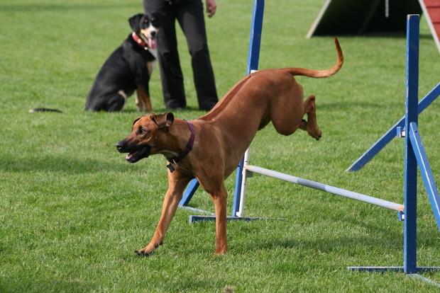 Hundesport3ds