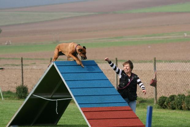 Hundesport4ds